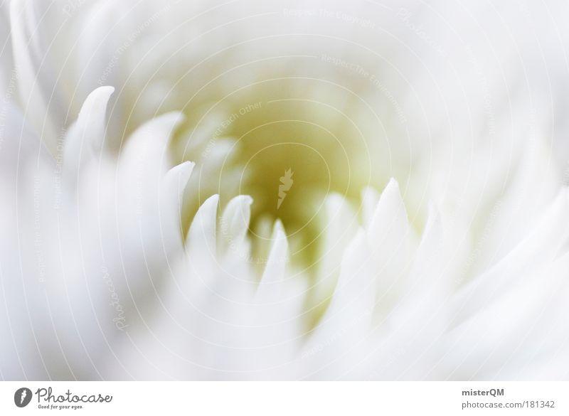 Soft. Natur Pflanze schön weiß Blume Blüte Hintergrundbild Kunst hell ästhetisch Blühend weich Blütenknospen himmlisch Geborgenheit festlich