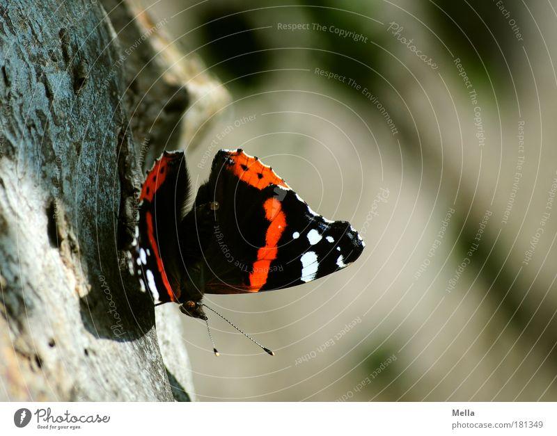 Abschied vom Sommer Farbfoto mehrfarbig Außenaufnahme Tag Licht Schatten Schwache Tiefenschärfe Totale Umwelt Natur Tier Baum Baumstamm Baumrinde Park