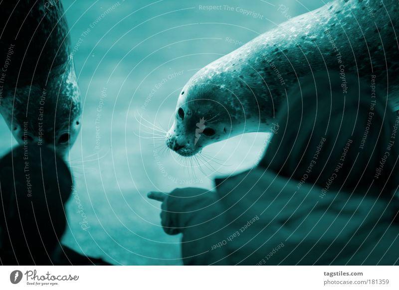 ICH DIESEN UND DU DEN, OK?! Natur Wasser Meer blau Tier Leben Spielen Kontakt Neugier Interesse wählen zeigen Begeisterung staunen begegnen wach