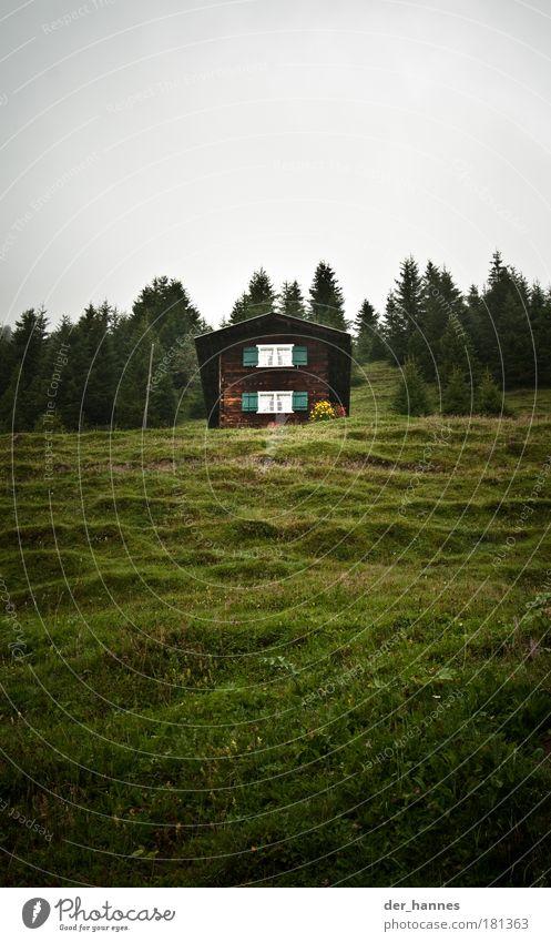 lass dein haar herunter... schön alt Baum Haus Wald Fenster Gras Feld Umwelt Alpen Hügel Hütte Fensterladen schlechtes Wetter Wildpflanze