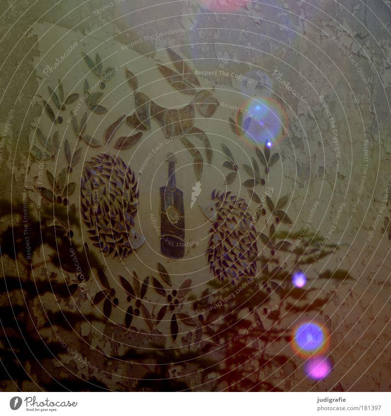 Hase und Igel alt Tier Haus Wand Gebäude Mauer Stimmung Kindheit Fassade Bildung Bauwerk Reflexion & Spiegelung Hase & Kaninchen Flasche Ruine Kindergarten