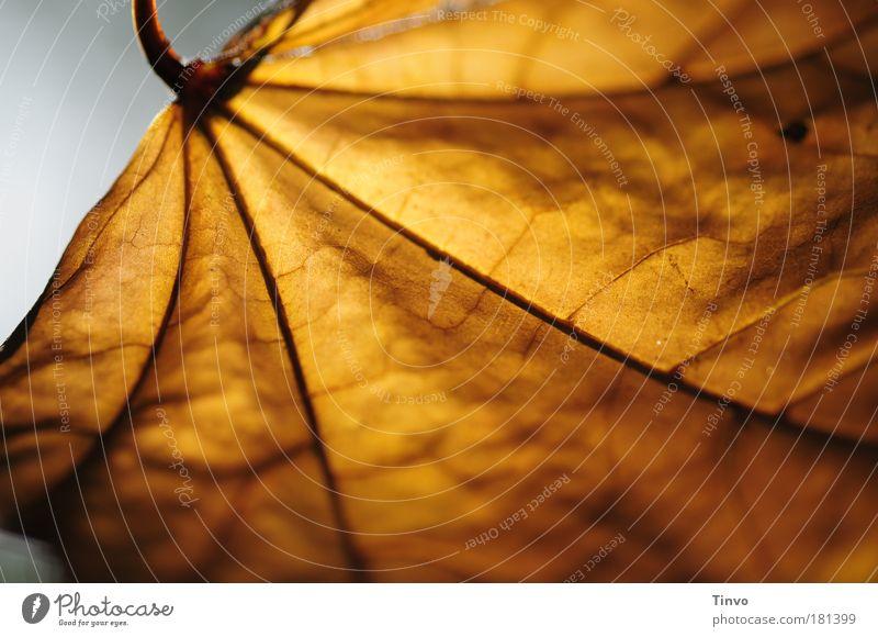 Herbst ist schön! Natur Blatt Wärme Zufriedenheit Optimismus ruhig Einsamkeit einzigartig Idylle Zukunft vertrocknet verzweigt Gefäße Jahreszeiten