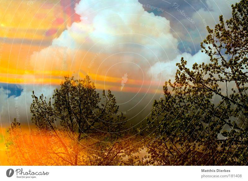 Orange Baum Wald Reflexion & Spiegelung alternativ Leuchtspur Reflektor mehrfarbig orange Umweltverschmutzung atomare Verseuchung Saurer Regen Gardine