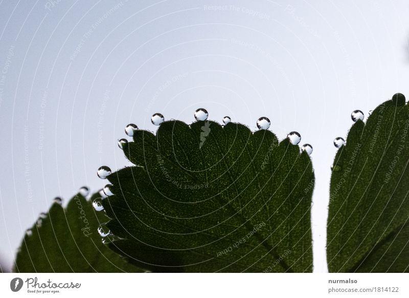 wasserperlen Himmel Natur Pflanze schön Erholung Blatt Tier natürlich feminin Glück Kunst Stimmung leuchten träumen glänzend ästhetisch
