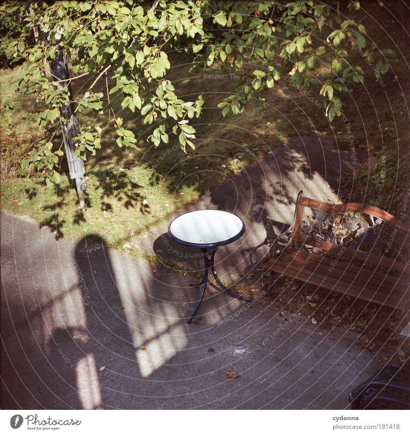 Secret Garden Farbfoto Außenaufnahme Detailaufnahme Textfreiraum unten Tag Licht Schatten Kontrast Sonnenlicht Schwache Tiefenschärfe Vogelperspektive