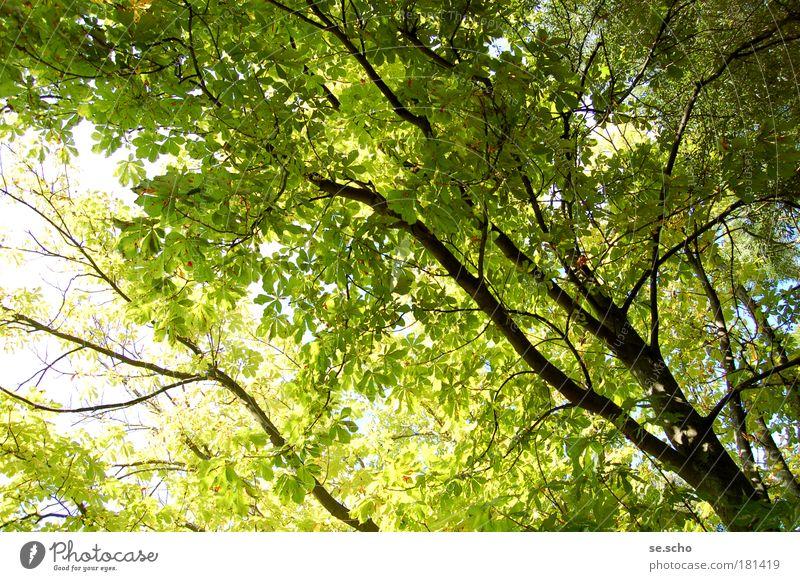 Sommerbaum Farbfoto Außenaufnahme Menschenleer Tag Licht Schatten Sonnenlicht Gegenlicht Weitwinkel Ferien & Urlaub & Reisen Ausflug Natur Himmel Wetter