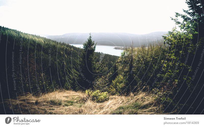 Schluchsee Ausflug Abenteuer Ferne Freiheit Berge u. Gebirge wandern Landschaft Herbst Nebel Wald Hügel Felsen Schwarzwald See Bewegung entdecken Erholung wild