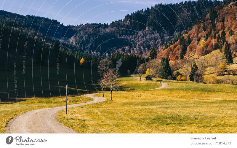 Schwarzwald im Herbst Natur Baum Einsamkeit Wald Berge u. Gebirge Leben Wege & Pfade Wiese Bewegung Gras Zeit Freiheit Tourismus Freizeit & Hobby Feld