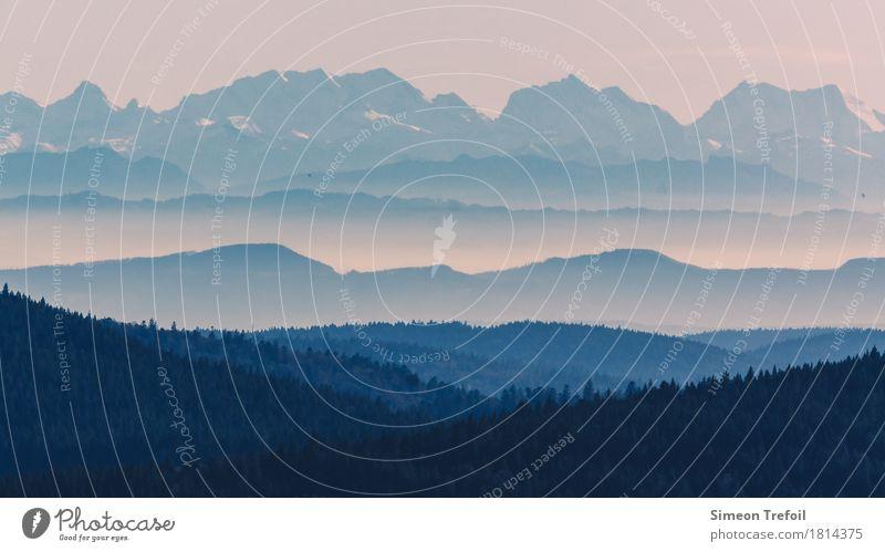Schwarzwald und Alpen blau Sommer Landschaft Einsamkeit Ferne Wald Berge u. Gebirge Herbst Tourismus Freiheit Felsen Ausflug Freizeit & Hobby Horizont wandern
