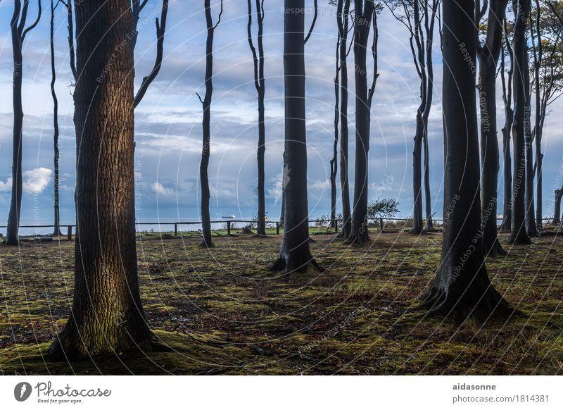 gespensterwald Natur Landschaft Wald Ostsee Zufriedenheit achtsam Wachsamkeit Vorsicht Gelassenheit geduldig ruhig Farbfoto Außenaufnahme Menschenleer Tag