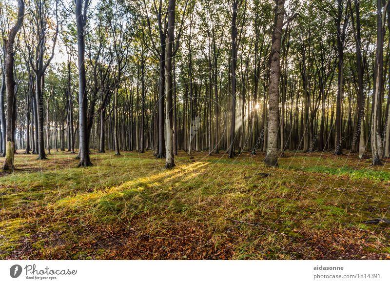 gespensterwald Natur Landschaft ruhig Freude Wald Zufriedenheit Lebensfreude Schönes Wetter Freundlichkeit Ostsee Gelassenheit achtsam Verlässlichkeit