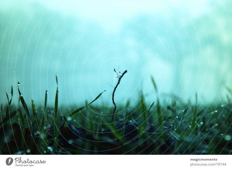 Wiese am Morgen Gras nass feucht
