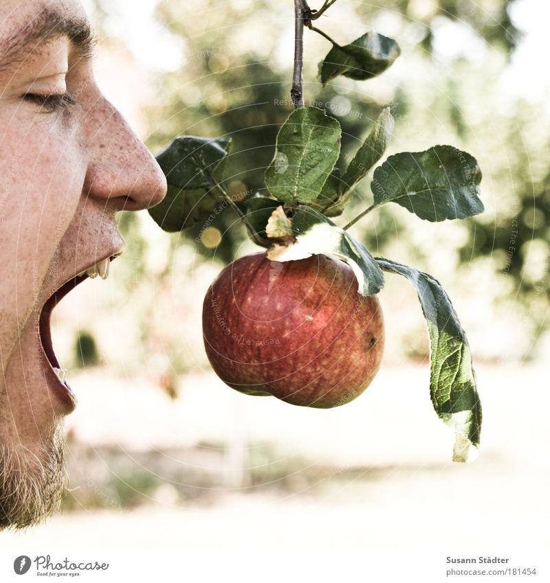 Eva`s Adam Mann Baum Pflanze Sommer Blatt Erwachsene Ernährung Garten lustig Essen Frucht verrückt Lebensmittel Apfel Mensch 18-30 Jahre