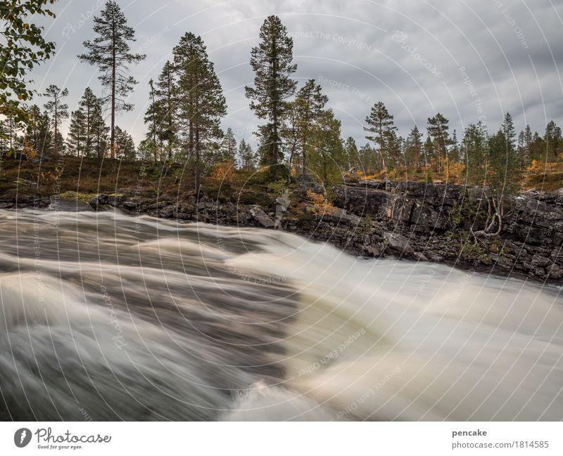 starker rausch Himmel Natur Wasser Baum Landschaft Wolken Herbst Geschwindigkeit nass Kraft Urelemente stark Wasserfall nordisch Norwegen Rauschen