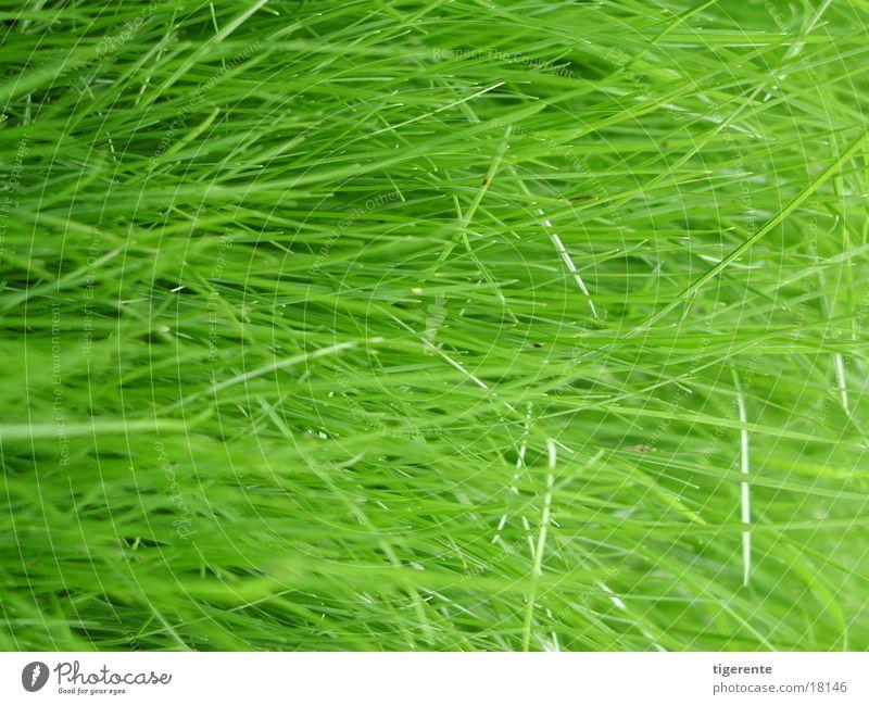 gras grün Gras frisch saftig
