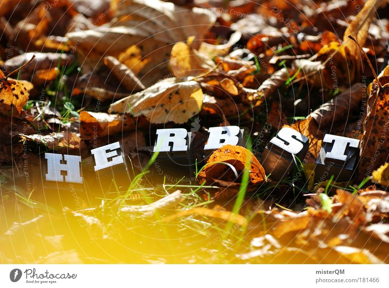 Rauschen. Natur Blatt Herbst Kunst braun Zufriedenheit Kindheit außergewöhnlich Schriftzeichen ästhetisch Boden Schönes Wetter Jahreszeiten Herbstlaub Heimat