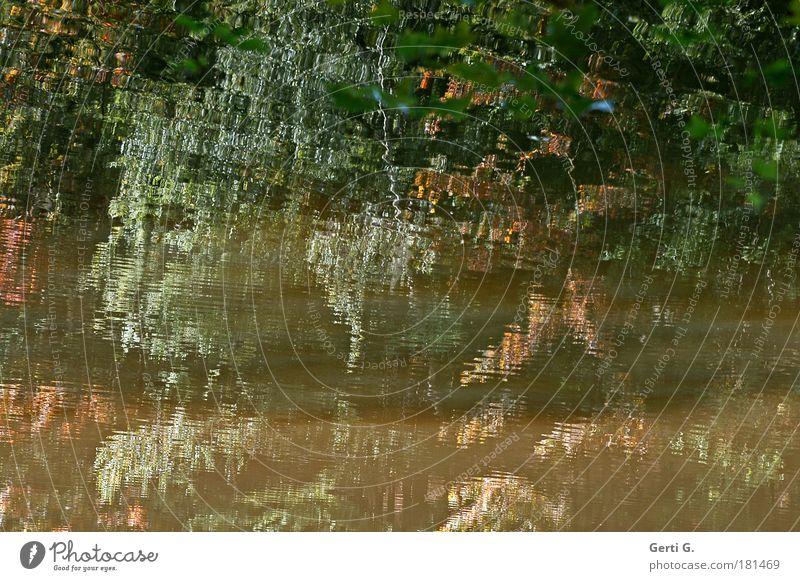 WildWasser Wasser Baum Blatt Herbst bizarr Verzerrung Mosaik herbstlich Wasseroberfläche Wasserspiegelung