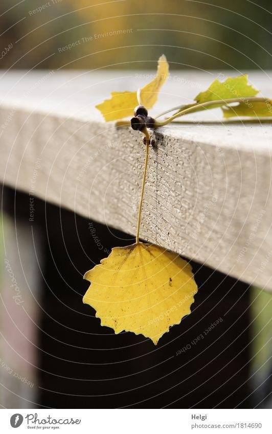 einfach mal abhängen... Natur Pflanze grün Blatt Umwelt gelb Herbst natürlich Holz klein außergewöhnlich braun Stimmung liegen Tisch einzigartig