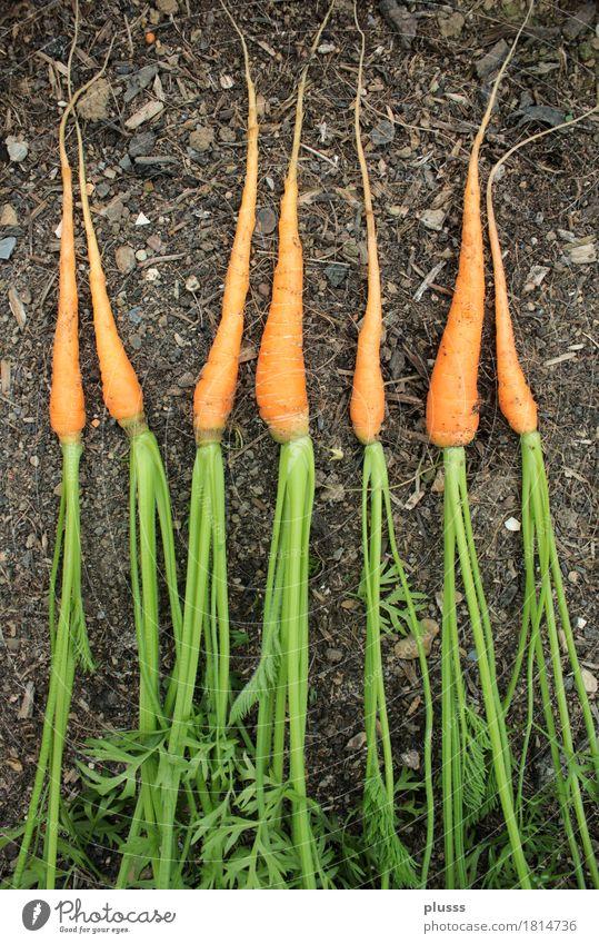 7 Karottenzwerge Lebensmittel Frucht Vegetarische Ernährung Familie & Verwandtschaft Freundschaft Menschengruppe Freude Glück Fröhlichkeit Lebensfreude