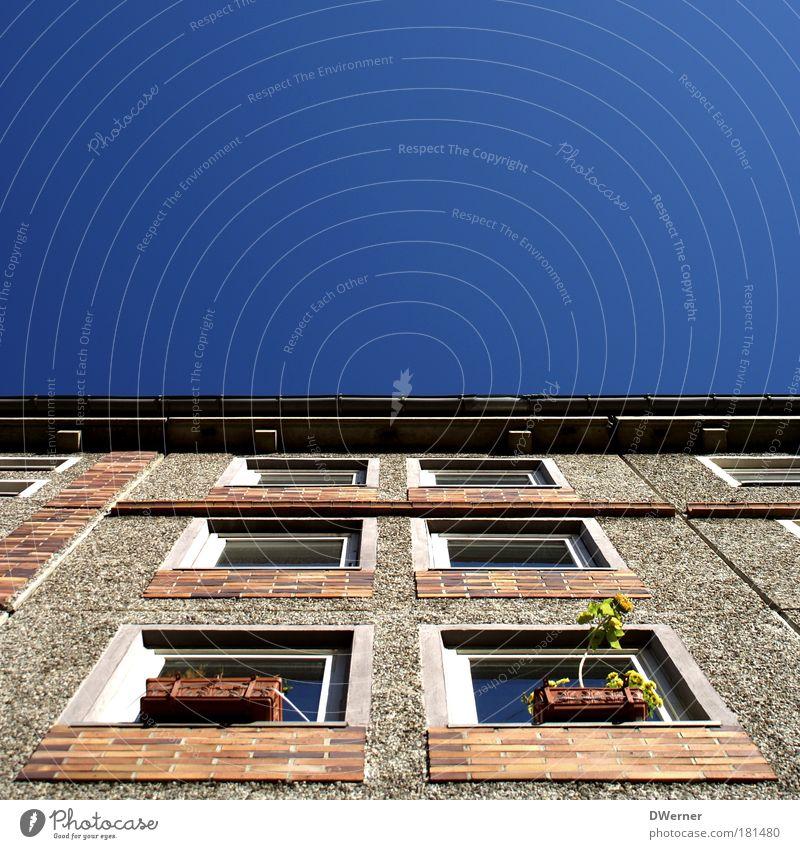 wohnen in Berlin-Mitte... Himmel schön Stadt Sonne Sommer Blume Haus Wand Fenster Mauer träumen Gebäude Wohnung Fassade Hochhaus Lifestyle