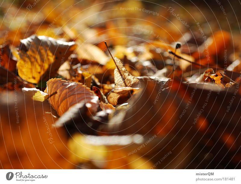 Froschperspektive. Natur Pflanze Blatt ruhig Erholung Umwelt Leben Herbst braun Boden Spaziergang fallen Ende Jahreszeiten Herbstlaub