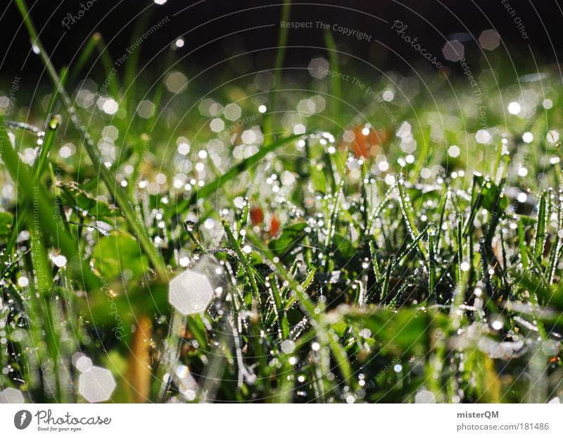 Growing. Natur Wasser schön kalt Wiese Herbst Umwelt Gras Regen Wetter nass abstrakt Pflanze frisch Wachstum Boden