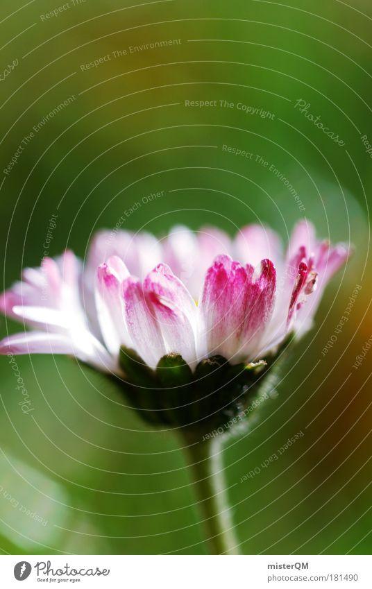 Aufn Wiesn. Natur schön weiß Blume Pflanze rot Einsamkeit Leben Wiese Blüte Gras Zufriedenheit klein elegant Rasen Blühend