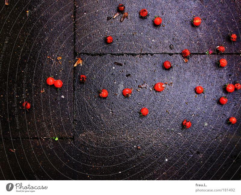 Tomaten Farbfoto Außenaufnahme Textfreiraum unten Tag Lebensmittel Gemüse Ernährung Bioprodukte Herbst schlechtes Wetter Regen Pflanze Balkon fallen leuchten