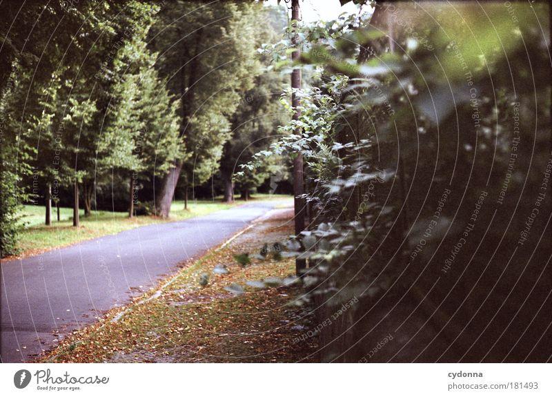 Blätter rauschen Farbfoto Außenaufnahme Menschenleer Textfreiraum rechts Tag Licht Schatten Kontrast Schwache Tiefenschärfe Zentralperspektive Umwelt Natur