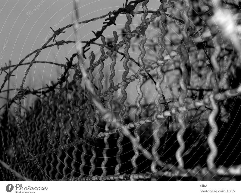 stacheldraht Stacheldraht Gitter Zaun Dinge Schwarzweißfoto