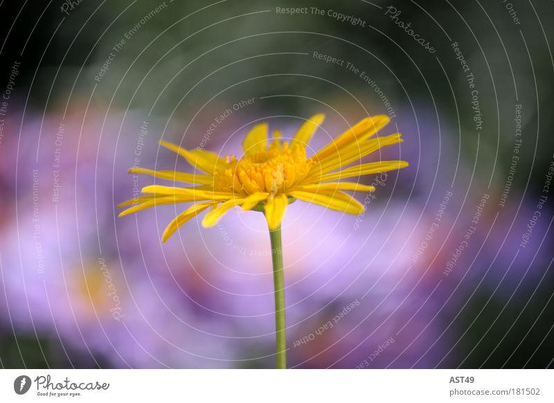 Blümchen schön Blume Pflanze Sommer ruhig Erholung Wiese Blüte Frühling Glück Park Stimmung Umwelt Fröhlichkeit rein