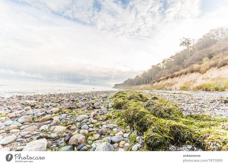Ostseestrand Landschaft Wolken Herbst Wetter Wald Zufriedenheit achtsam Vorsicht Gelassenheit geduldig ruhig Farbfoto Menschenleer Tag