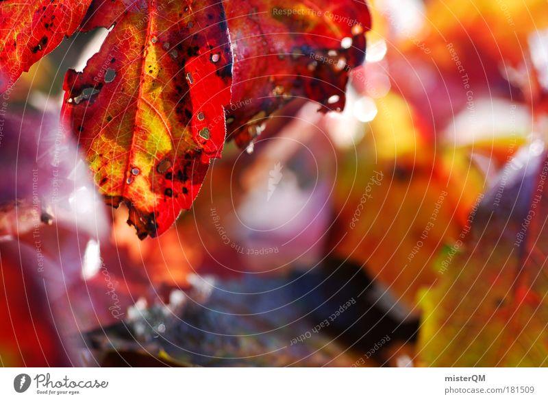 Weinprobe. Natur Pflanze schön Landschaft rot Blatt Umwelt Herbst Tod frisch Herbstlaub herbstlich Makroaufnahme Menschenleer Weinlese Herbstfärbung