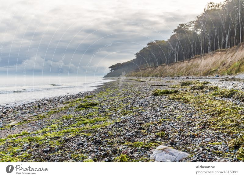 ostseestrand Landschaft Wolken Herbst Unwetter Wald Ostsee Zufriedenheit achtsam Vorsicht Gelassenheit geduldig ruhig Farbfoto Außenaufnahme Menschenleer Tag