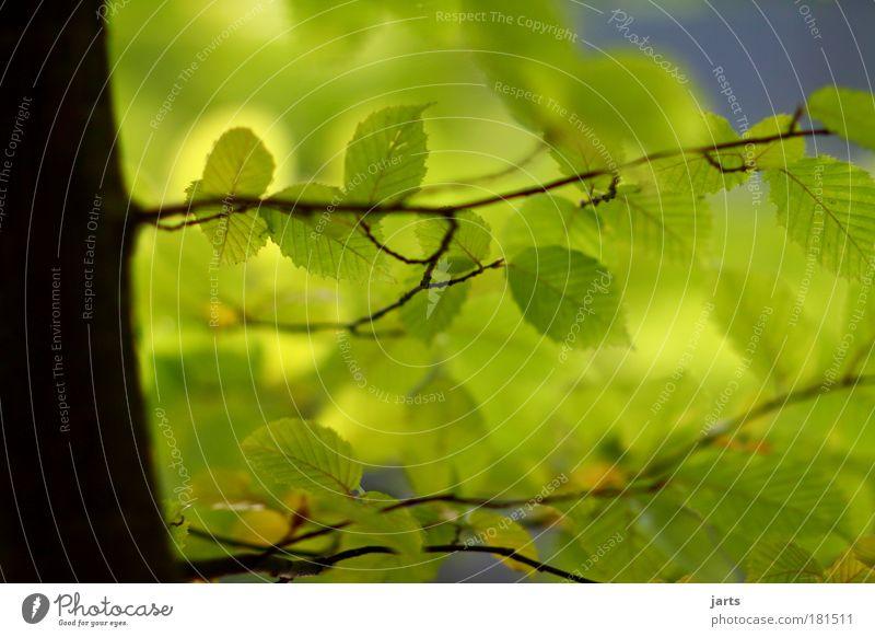 grün Farbfoto Außenaufnahme Nahaufnahme Menschenleer Tag Licht Schatten Sonnenlicht Starke Tiefenschärfe Zentralperspektive Umwelt Natur Sommer Herbst Klima