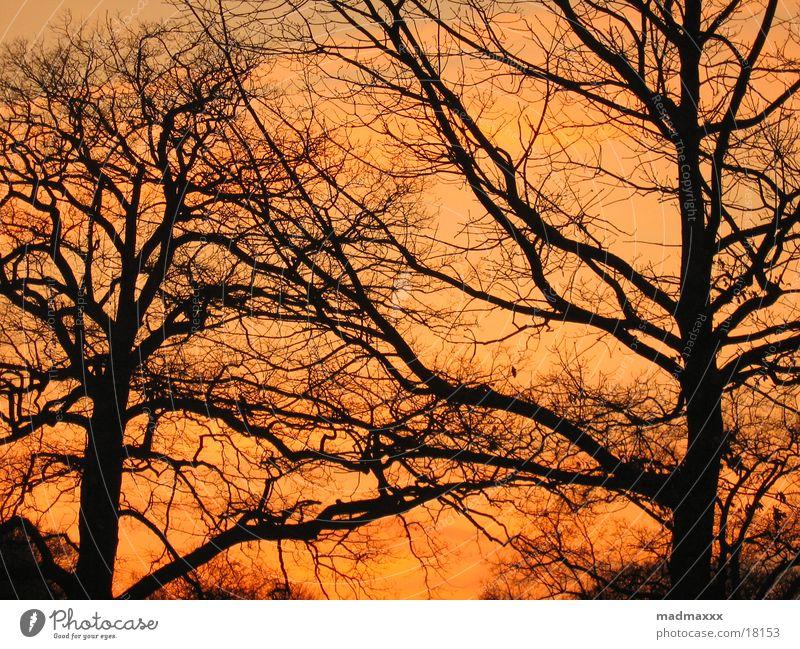 Abendsonne Baum rot Stimmung spät