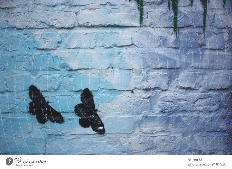 Black Butterflies Farbfoto Gedeckte Farben Außenaufnahme Menschenleer Zentralperspektive Umwelt Natur Tier Haus Bauwerk Gebäude Mauer Wand Fassade Schmetterling
