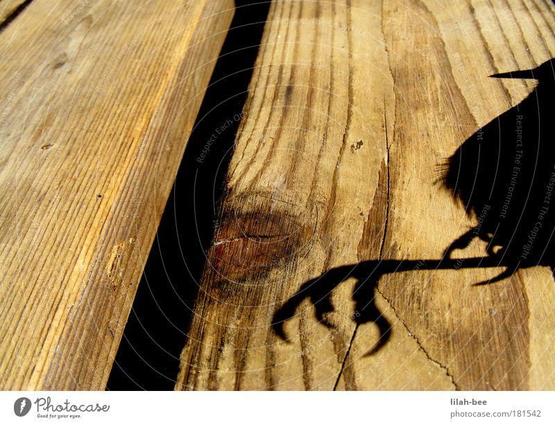 auf grossem fuss gelebt... schwarz Tier gelb kalt Holz grau Vogel weich Fell Wildtier Krallen Totes Tier