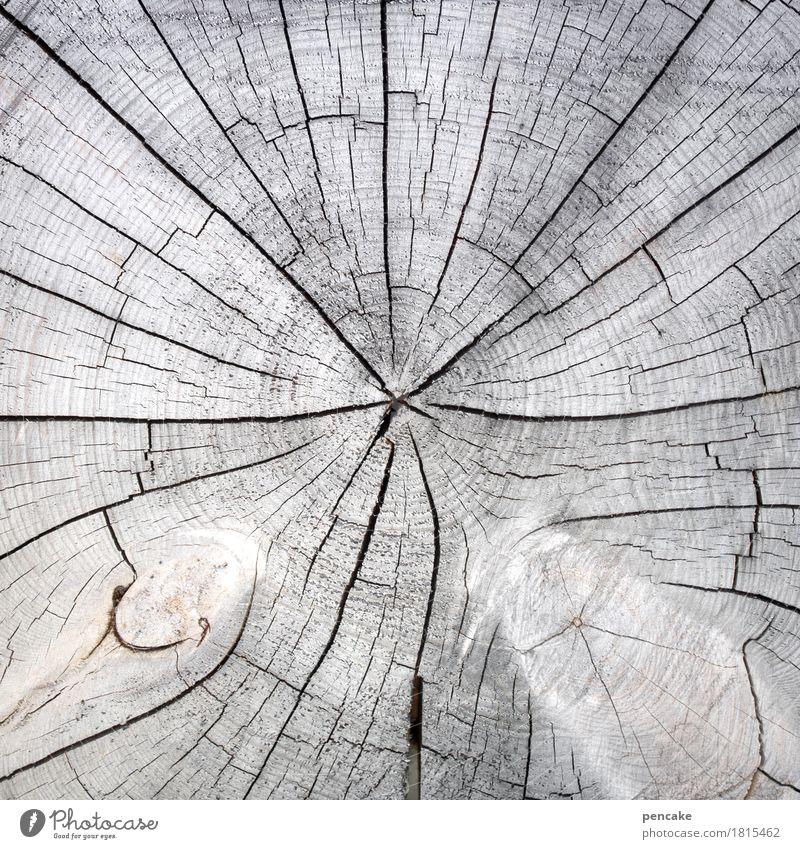 von der sonne verwöhnt Natur Pflanze Baum Holz natürlich Sauberkeit trocken grau Baumscheibe Riss Jahresringe ausgebleicht Gedeckte Farben Außenaufnahme