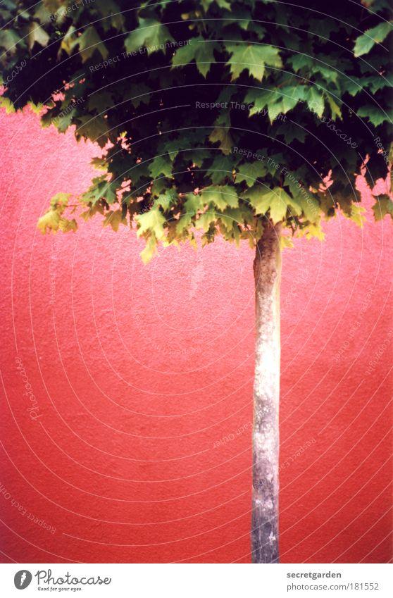[KI09.1] der herbst kann kommen. Natur Baum grün rot Sommer Blatt gelb Wand Holz Mauer Zufriedenheit Umwelt Beton ästhetisch dünn
