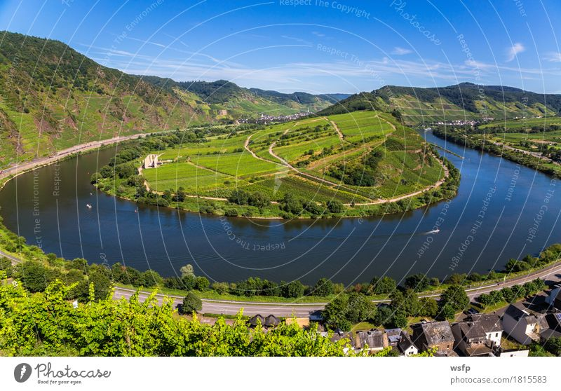 Moselschleife bei Bremm im Sommer Panorama Fluss Idylle Moseltal bremm calmont mosel moselschleife Weintrauben Eifel Rheinland-Pfalz Weinbau Weinberg