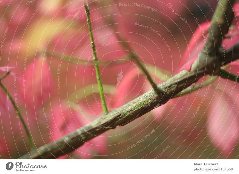 Oktober Farbfoto mehrfarbig Außenaufnahme Nahaufnahme Detailaufnahme Makroaufnahme Experiment abstrakt Menschenleer Tag Schatten Lichterscheinung Unschärfe