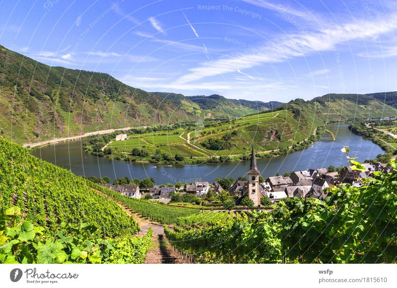 Blick auf Bremm an der Mosel mit Moselschleife Sommer Idylle Fluss Wein Tal Weinberg Weinbau Weintrauben Eifel Rheinland-Pfalz
