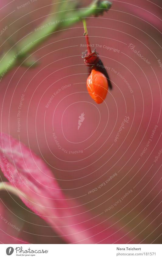 Octobre Natur schön Baum rot Pflanze Blatt Umwelt Landschaft Herbst Glück Blüte Park rosa frisch verrückt Fröhlichkeit