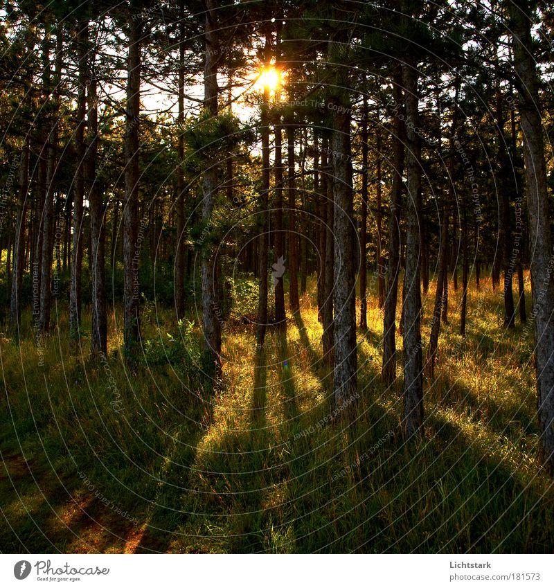 End of summer- Sommer adé Natur Wasser Baum gelb Wald dunkel Erholung Gras Freiheit Holz träumen Landschaft Luft braun Umwelt