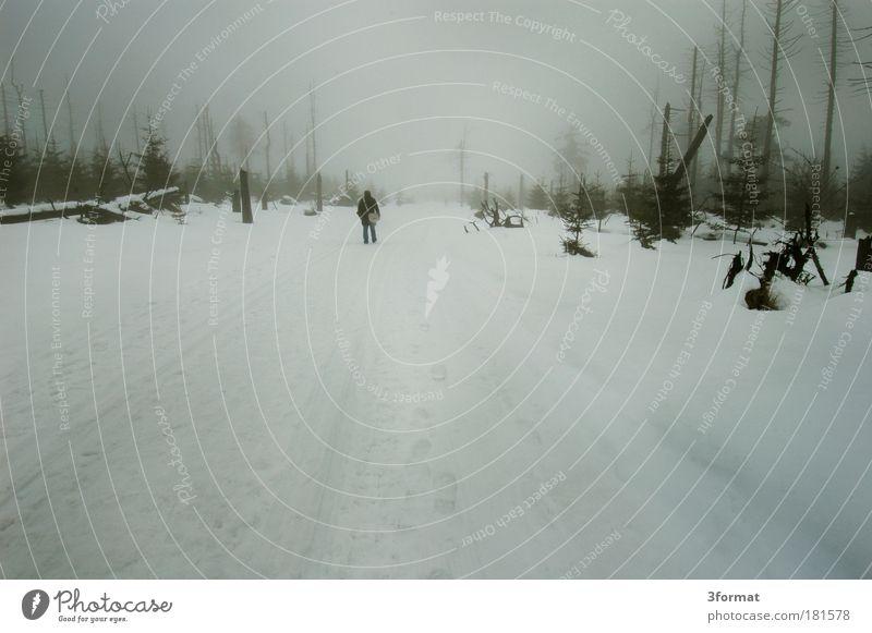 RUSSISCHER WINTER Mensch Mann Natur Baum Winter ruhig Wolken Einsamkeit Wald kalt Schnee Berge u. Gebirge Traurigkeit Wege & Pfade Regen Landschaft
