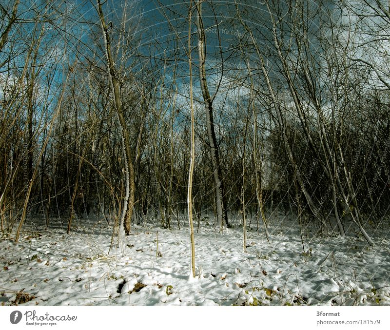 UNTERHOLZ Natur Himmel Baum Pflanze Winter ruhig Einsamkeit Wald Landschaft Umwelt Hoffnung mehrere Ende Idylle Langeweile Schönes Wetter