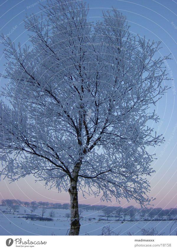 Winterbaum Baum Winter kalt Landschaft