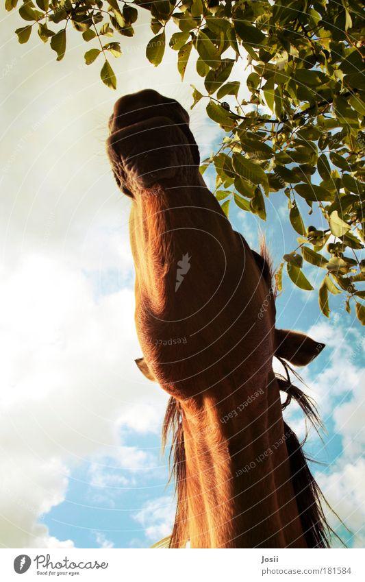 Ich will da ran! Tier Mund Freizeit & Hobby Pferd Brust Haustier