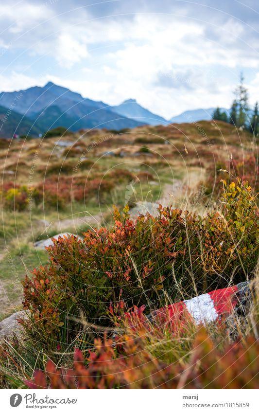 Herbstliches Wandern Ferien & Urlaub & Reisen Tourismus Ausflug Berge u. Gebirge wandern Landschaft schlechtes Wetter Heidelbeerstrauch Alpen